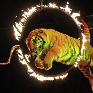 Цирки Туголесского Бора