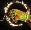 Цирки в Туголесском Бору
